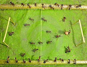 hormigas-jugando-futbol